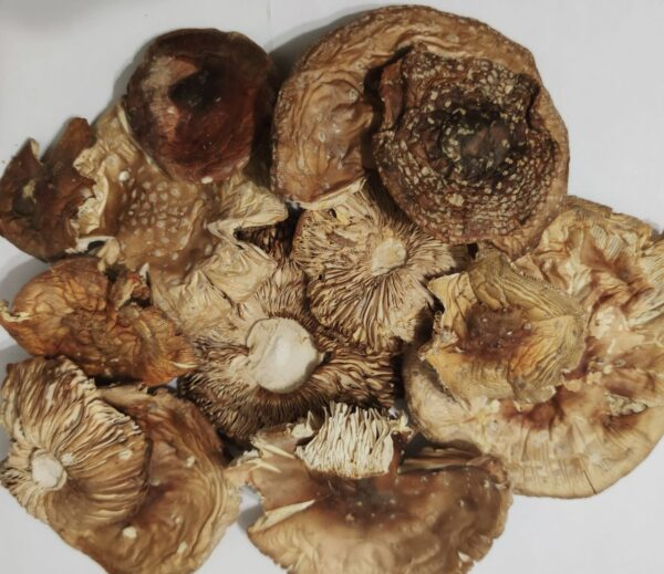 Мухомор красный сушеный шляпки — 3 грн