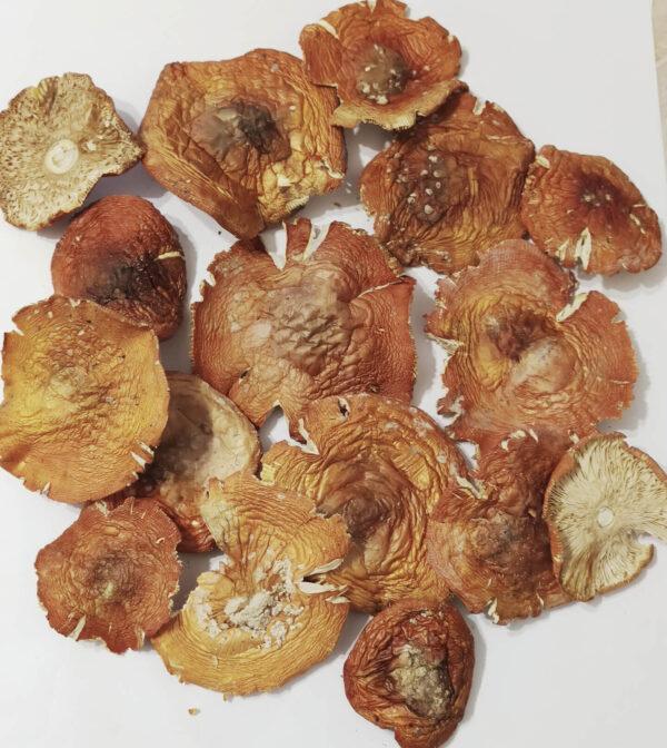 Мухомор червоний капелюшки – 5 грн