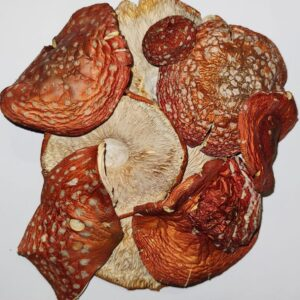 Мухомор червоний капелюшки – 7 грн