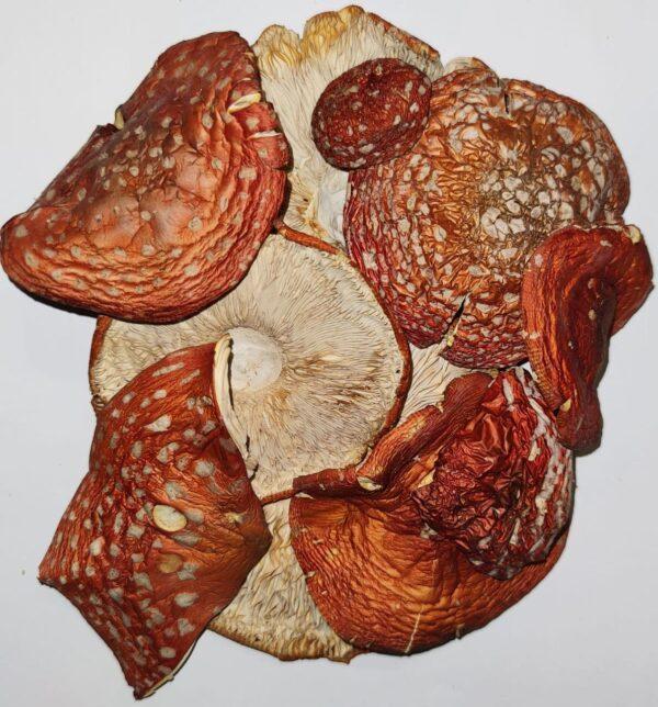 Мухомор красный шляпки — 7 грн
