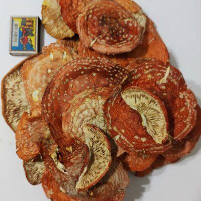 Шляпки красного мухомора 100 грам