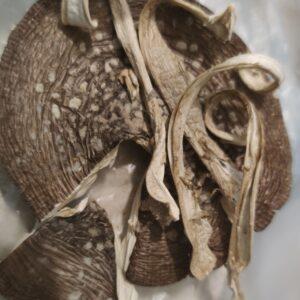 Пантерний Мухомор ніжки