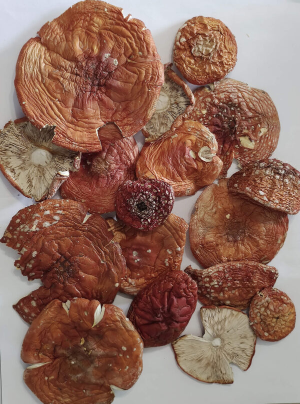 Мухомор красный шляпки — 6 грн